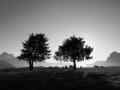 800px-alberi_alpedisiusi