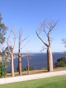 Kings Park in Perth